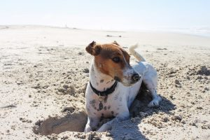 Take your pup to the best dog-friendly beaches in Willard Beach, Maine