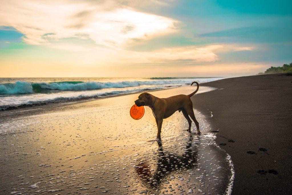 Dog-friendly beach in Maine