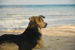 Dog enjoying a beach in Maine