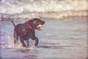 Find the best dog-friendly beaches in Maine